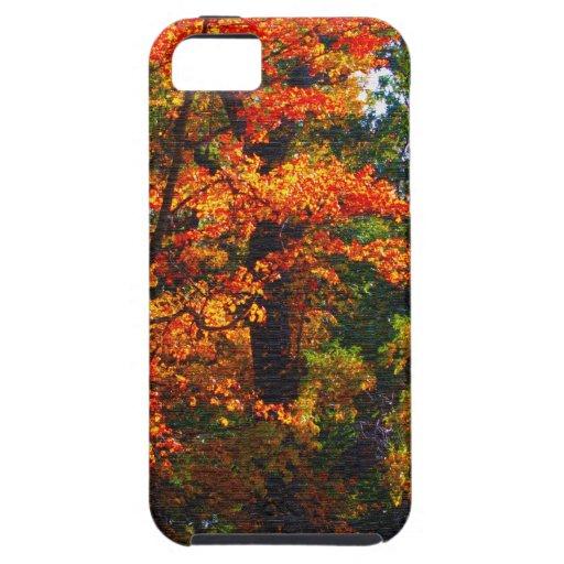Follaje del otoño iPhone 5 funda