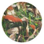 Follaje e hierba platos