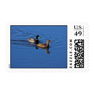 Follow Me Duck Postage