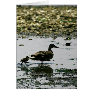 Follow the leader - Mama duck and duckling Card