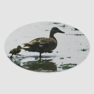 Follow the leader - Mama duck and duckling sticker