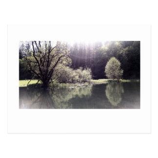 Follow the Light 2 Postcard