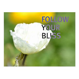 Follow Your Bliss White Tulip Postcard