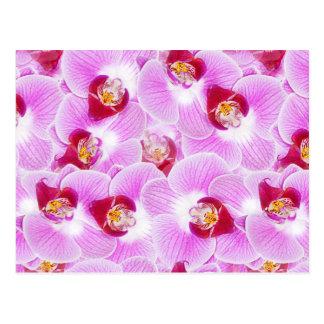 Fondo abstracto de una fotografía de la flor de la postales