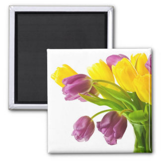 Fondo amarillo y púrpura de los tulipanes modifica iman de frigorífico
