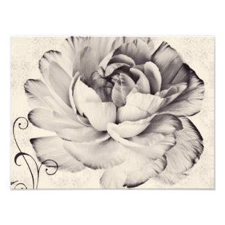 Fondo blanco del negro de la flor del ranúnculo fotografía