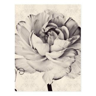 Fondo blanco del negro de la flor del ranúnculo tarjeta postal