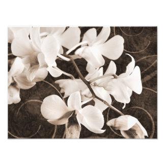Fondo blanco del negro de la sepia de la flor de cojinete