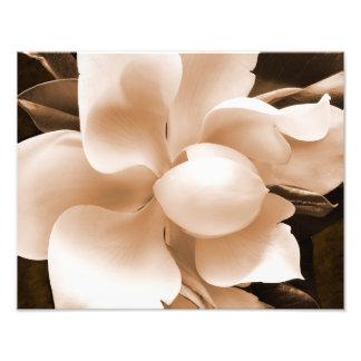 Fondo blanco del negro de la sepia de la flor de fotografía