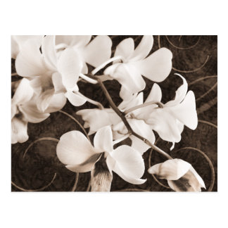 Fondo blanco del negro de la sepia de la flor de postales