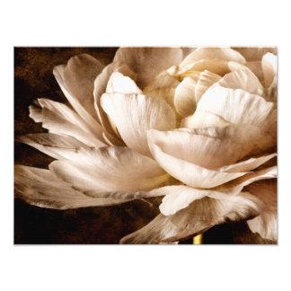 Fondo blanco del negro de la sepia de la flor del fotografía