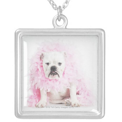 fondo blanco, dogo blanco, pluma rosada colgante cuadrado