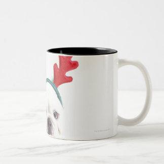 fondo blanco, dogo masculino blanco, rojo taza de dos tonos