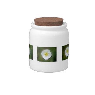 Fondo borroso de la amapola blanca platos para caramelos