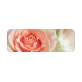 Fondo color de rosa rosado del melocotón etiqueta de remite