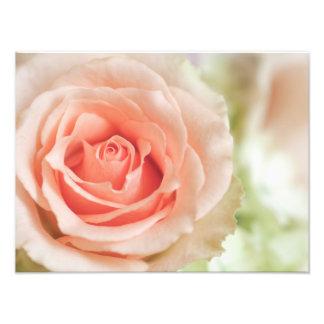 Fondo color de rosa rosado del melocotón modificad impresión fotográfica