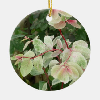 fondo colorido de las hojas de la planta del ornamento de navidad