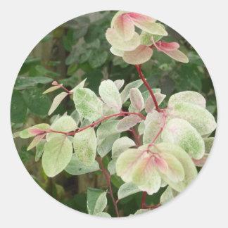 fondo colorido de las hojas de la planta del etiqueta redonda