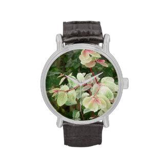 fondo colorido de las hojas de la planta del reloj