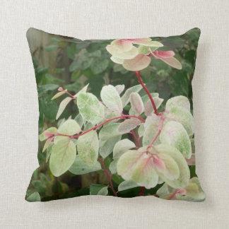 fondo colorido de las hojas de la planta del snowb almohada