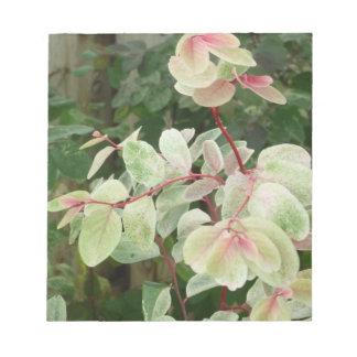 fondo colorido de las hojas de la planta del snowb bloc