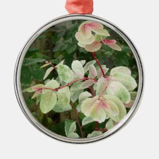 fondo colorido de las hojas de la planta del snowb ornaments para arbol de navidad