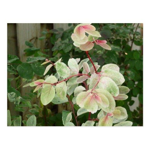 fondo colorido de las hojas de la planta del snowb tarjeta postal
