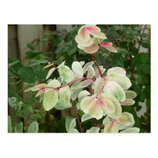 fondo colorido de las hojas de la planta del postal