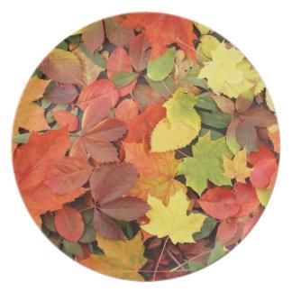 Fondo colorido de las hojas de otoño caidas plato para fiesta