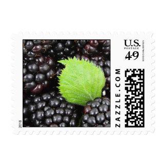 Fondo de Blackberry Sello Postal