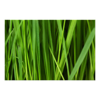 Fondo de la hierba verde poster