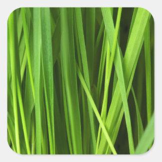 Fondo de la hierba verde pegatina cuadrada