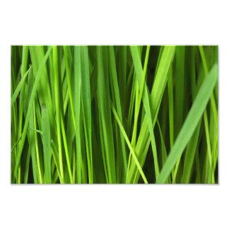 Fondo de la hierba verde fotografia