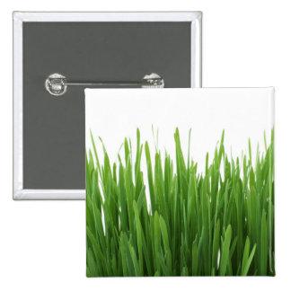 Fondo de la hierba verde pin
