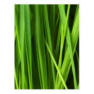 Fondo de la hierba verde postal