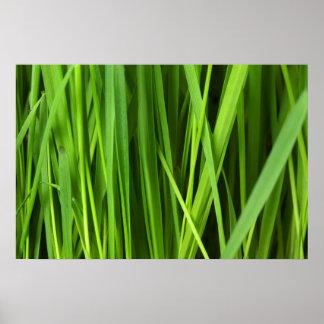Fondo de la hierba verde póster