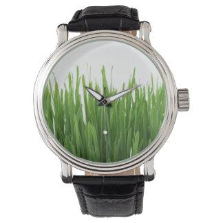 Fondo de la hierba verde relojes de mano