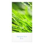Fondo de la hierba verde tarjetas fotograficas