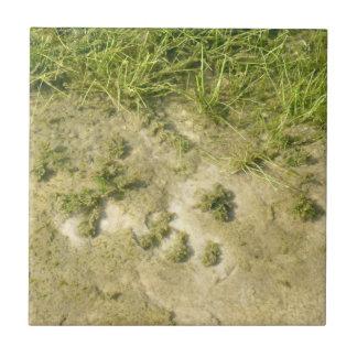 Fondo de la hierba y de la arena de la charca azulejo cuadrado pequeño