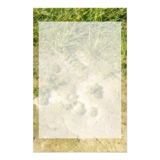 Fondo de la hierba y de la arena de la charca  papeleria