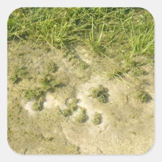 Fondo de la hierba y de la arena de la charca