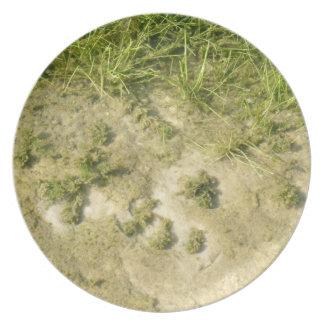 Fondo de la hierba y de la arena de la charca plato de comida