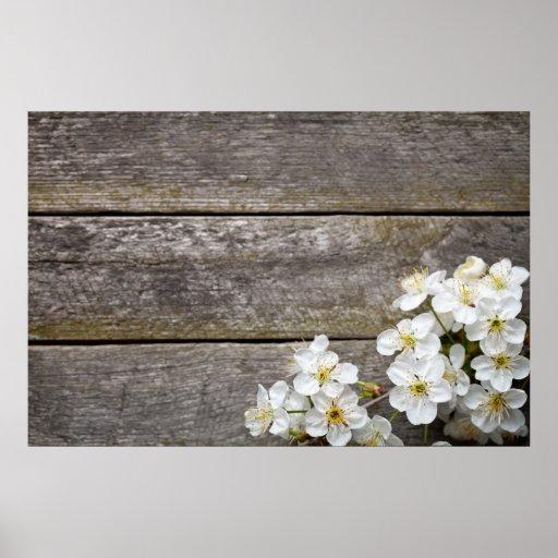 Fondo de la primavera con las flores de la cereza póster