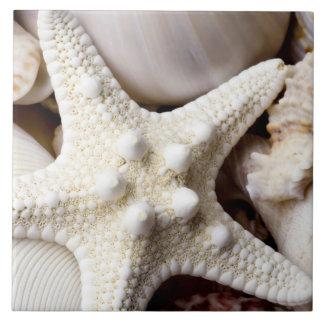 Fondo de las estrellas de mar de Shell del mar - c Azulejo Ceramica