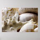 Fondo de las estrellas de mar de Shell del mar - c Impresiones