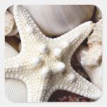Fondo de las estrellas de mar de Shell del mar - c Calcomanías Cuadradass