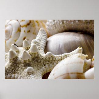 Fondo de las estrellas de mar de Shell del mar - c Póster