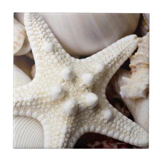 Fondo de las estrellas de mar de Shell del mar - c Tejas Cerámicas