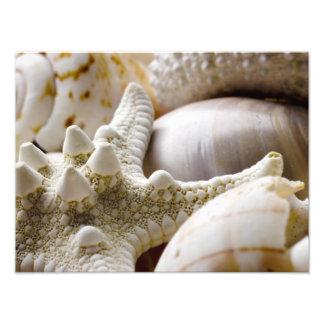 Fondo de las estrellas de mar de Shell del mar - Cojinete