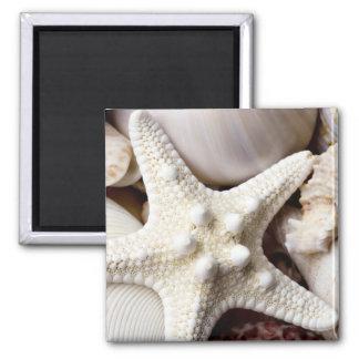 Fondo de las estrellas de mar de Shell del mar - Imán Cuadrado